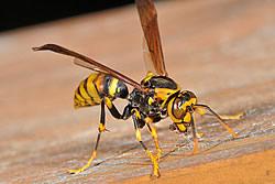 蜂の巣駆除 兵庫