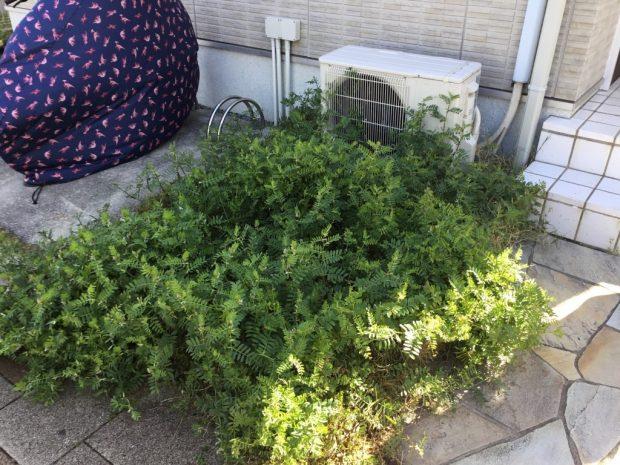 【西宮市北口町】草むしり、防虫作業のご依頼☆お庭の外観もきれいになりご満足いただけました!