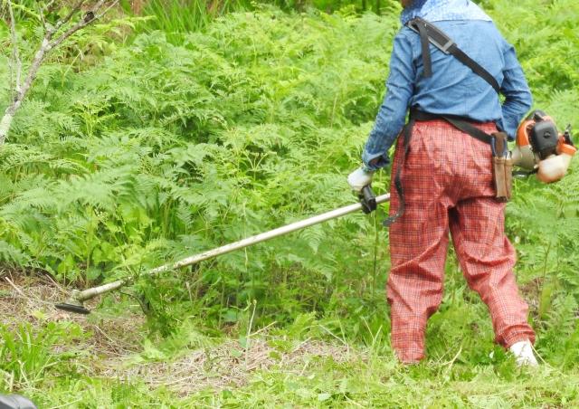 豊岡市で草刈りにかかる料金相場は?追加料金や業者選びのコツまで解説